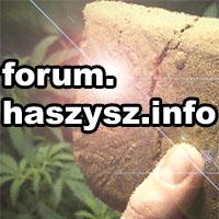 haszysz, forum o marihuanie, konopiach, indyjskich, cannabis